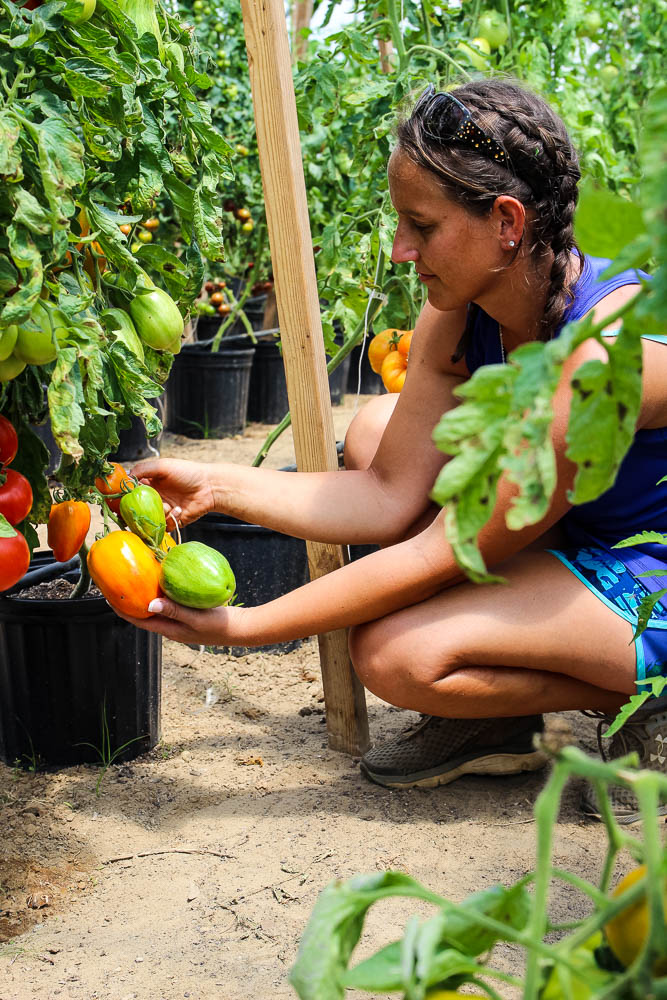 Bea Skinner crouching and showing her heirloom tomatoes on crescere farms.