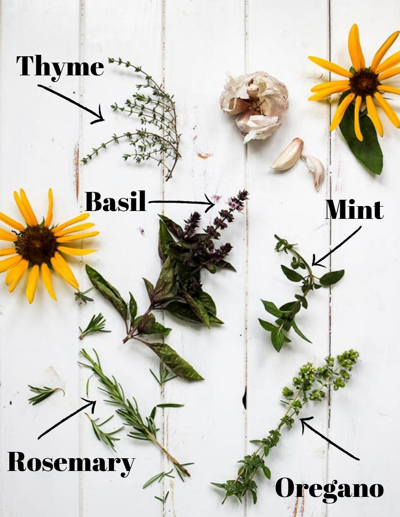 fresh herbs for chickens graphic