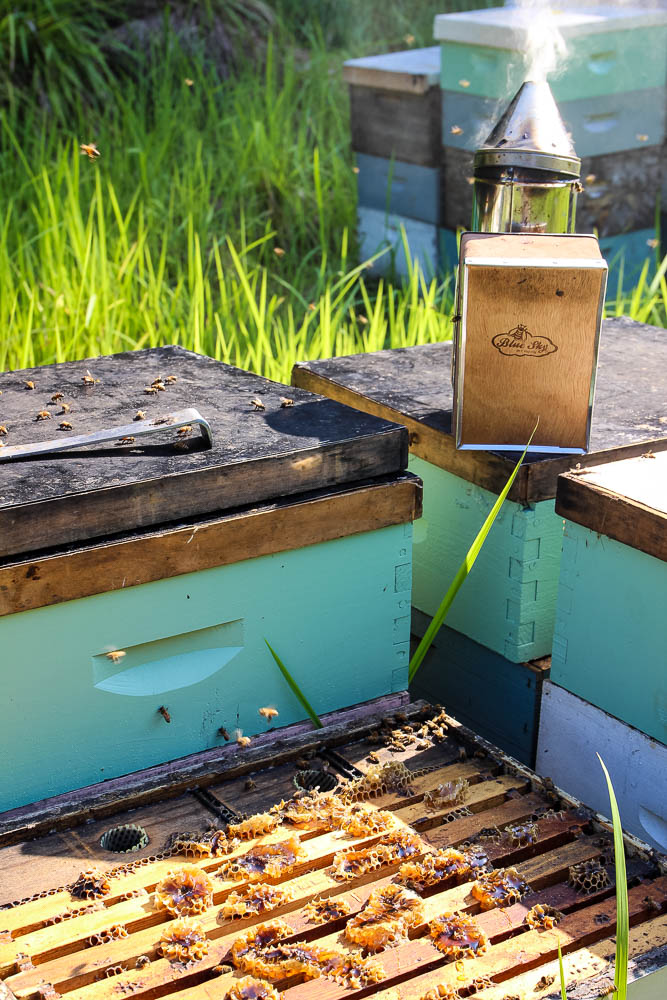 east hill honey colonies