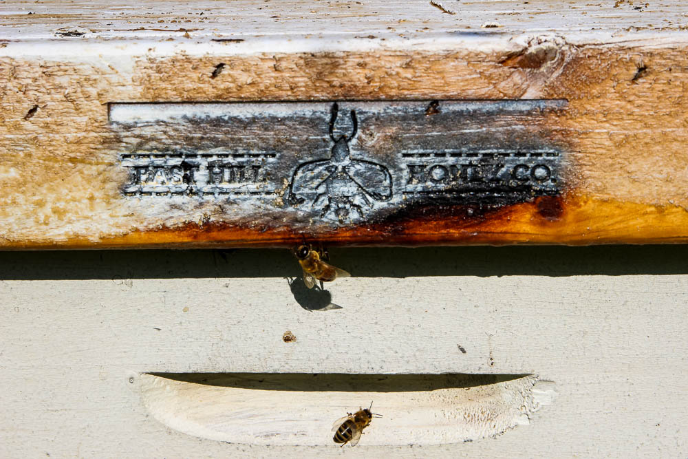 east hill honey colony with bees