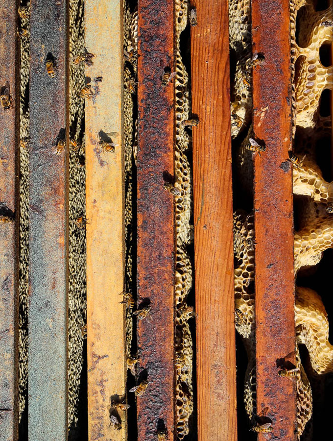 East Hill Honey colony frame with honey comb