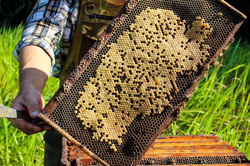 east hill honey pulls screen of honey