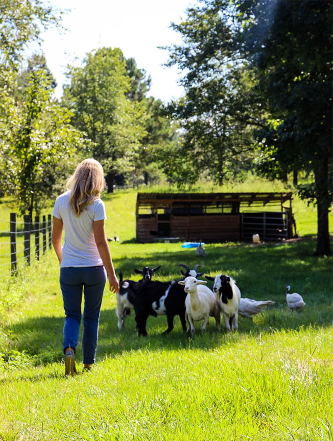 Meredith Elliot feeds her rescue goats, sheep and poultry on her farm, Maeday Farm.
