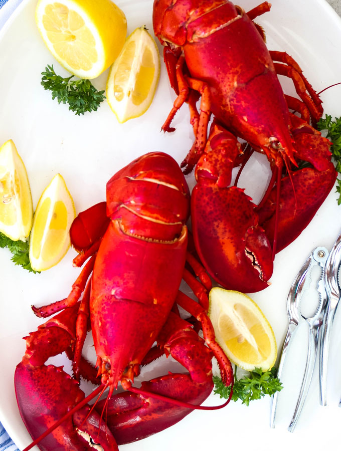 Fresh cooked Maine lobster is displayed on a white platter with lemon wedges.