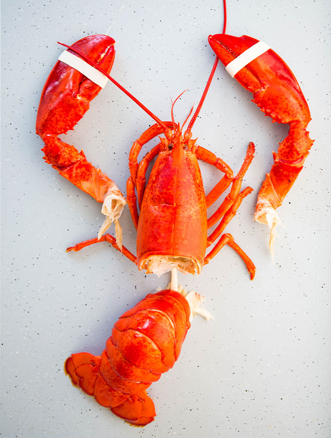 A freshly steamed lobster is pulled apart so the meat can be harvested.